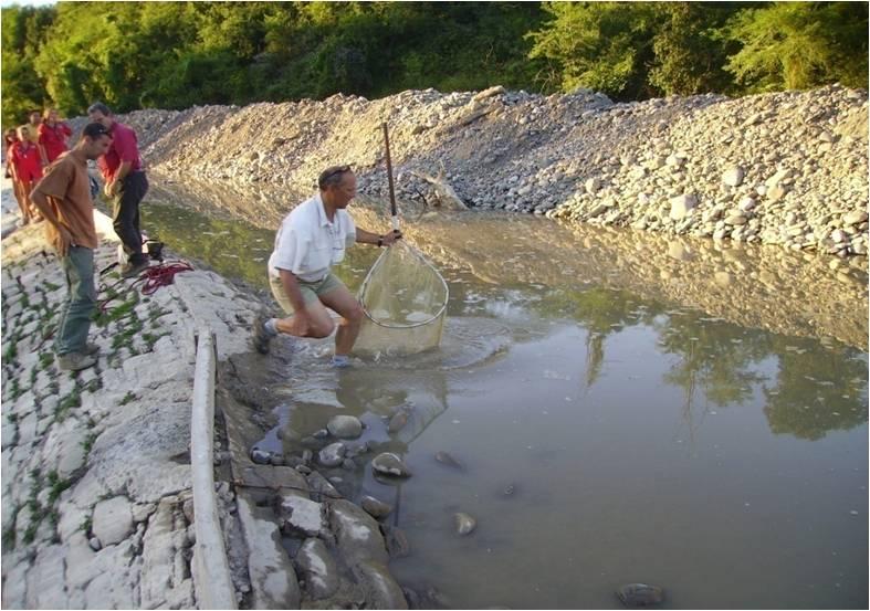 Lâcher d'un saumon
